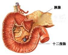 儿童 胰腺/疾病名称:儿童胰腺功能不全并中性粒细胞减少症综合征